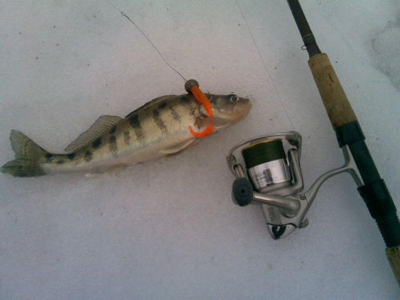 на что клюет рыба берш