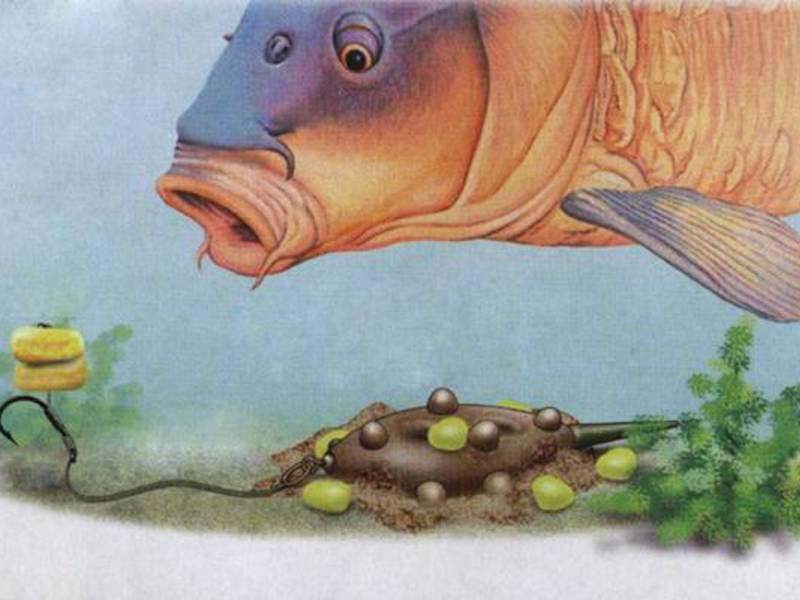 Как ловить сома на лягушку