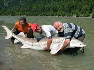 фото рыбы белуги