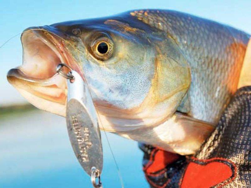 Ловля рыбы на блесны