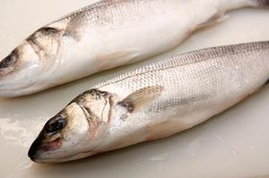 Как питается рыба сибас