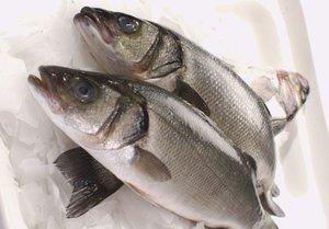 На что ловится рыба сибас