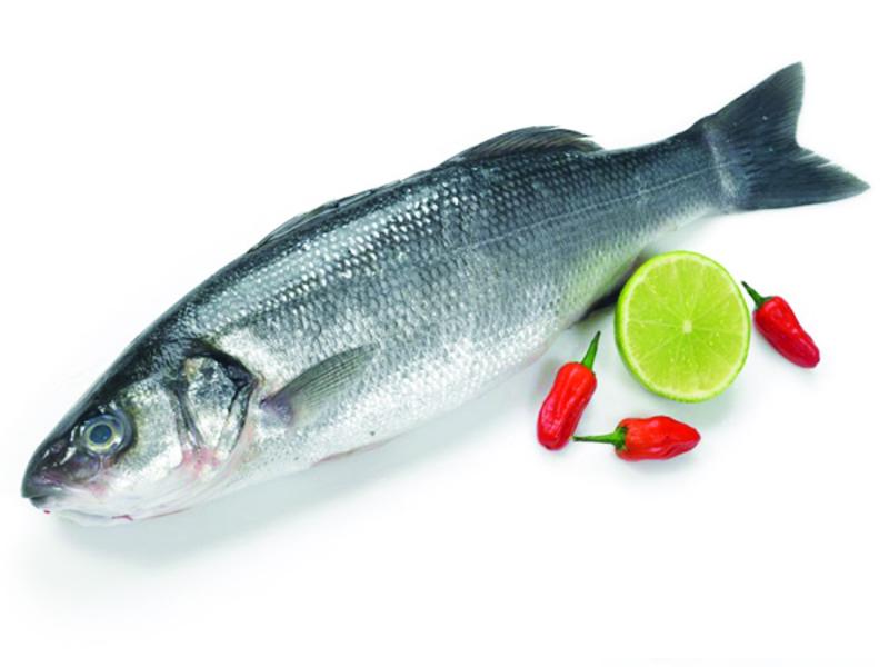 недорогой эхолот для рыбалки с берега