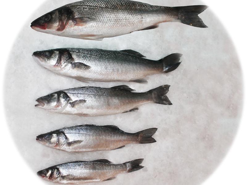 Как ваглядит рыба сибас
