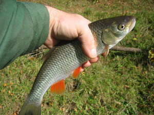 рецепты прикормки для рыбалки для карася