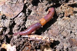 Основные условия для занятия разведением червей