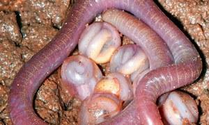 Особенности ухода за червями