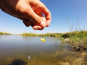 Советы опытных рыболовов когда и какие использовать наживки для ловли карпов