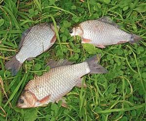 Осенняя рыбалка на карася