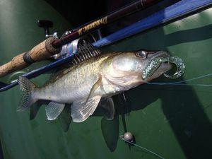 Ловля судака на спиннинг, сезонность и места обитания, выбор снастей, проводки и другие советы рыболовов