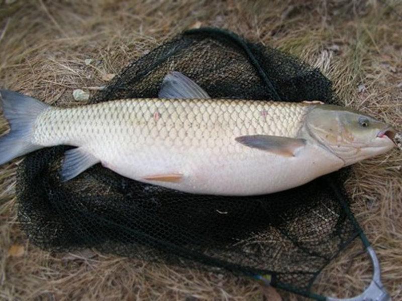 какая рыба ловится в начале июля