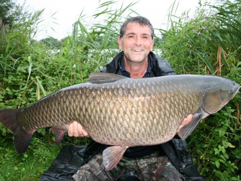 Размеры рыбы белый амур