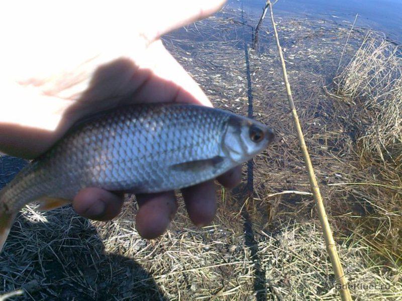 какая рыба клюет на червяка прикол