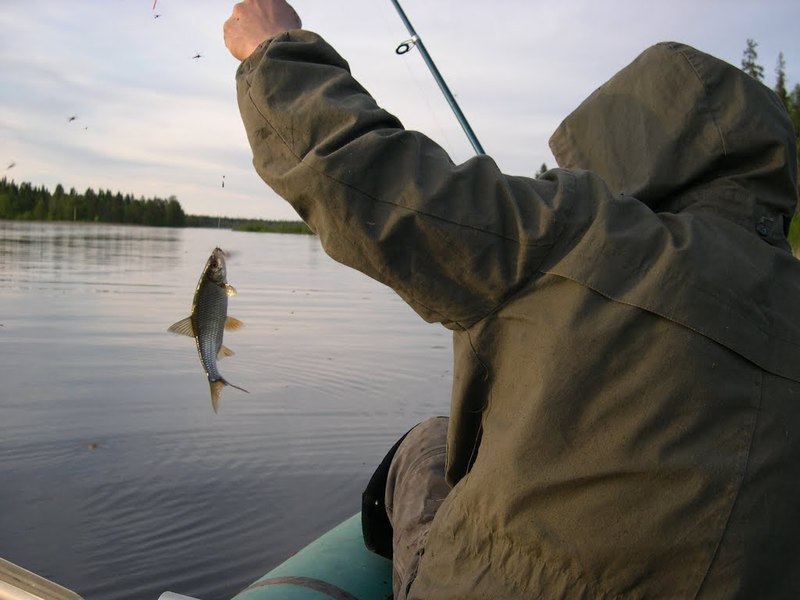 рыба которая ловится ночью