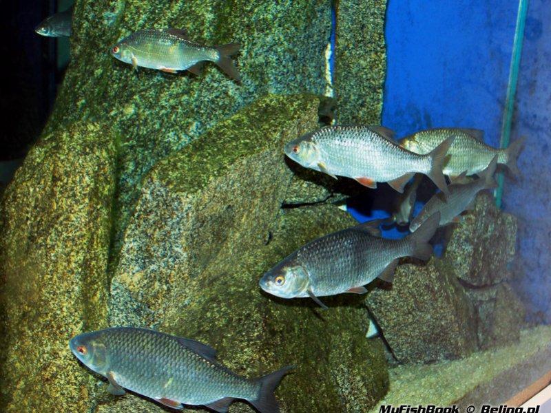 какая рыба ловится на волге в октябре