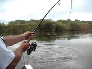 Описание особенностей поклёвки жереха и вываживания рыбы