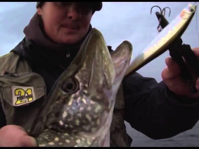 рыбалка на алтае новый сайт на щуку
