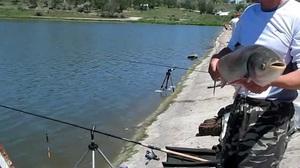 Советы опытных рыболовов как пользоваться снастью убийца толстолоба и правильно ловить рыбу