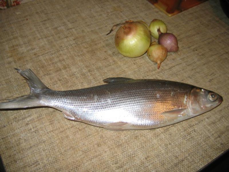 Рыба сиг рецепты приготовления
