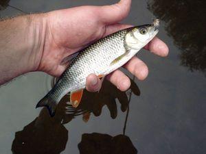 Удочка или спиннинг? Как ижевчанам бюджетно собраться на рыбалку и какие снасти выбрать