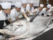 Тихоокеанский голубой тунец
