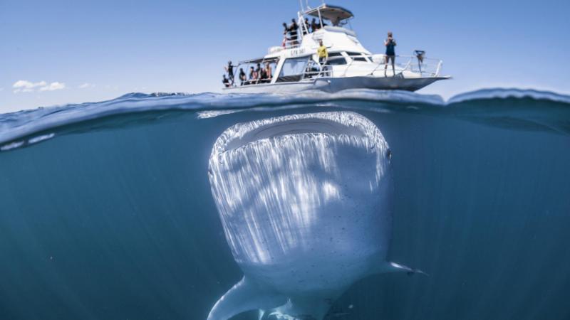3 самых больших рыбы в мире